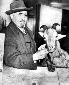 Photo shows William Sianis and his goat. The goat was ejected from Wrigley Field on October 12, during the 1945 World Series, despite having his own paid seat. An angry Sianis cursed the Cubs, saying they would never again win a World Series. The Cubs went on to lose the 1945 Series, and have since never appeared in a World Series game. Photo: https://www.flickr.com/photos/guano/